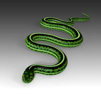 Green Snake Rigged