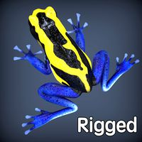 Poison Dyeing Frog Rigged