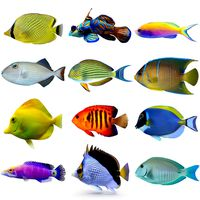 Reef Fish Collection 02