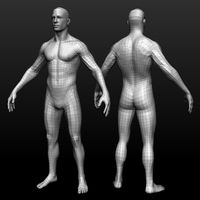 Base mesh male body