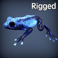 Blue Poison Frog Rigged