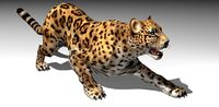 Leopard Animated