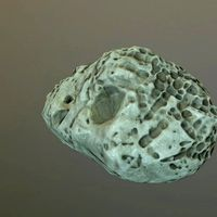 Game ready Beach Rock from Photogrammetry