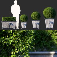 Boxwood in  Estate Zinc Ring Square Planters