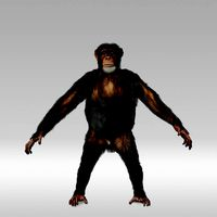 CHIMP (RIGGED, FUR)
