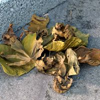 A pile of dried leaves