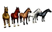 horses lowpoly collection rigg animated