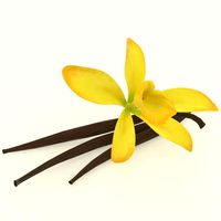 Vanilla spice realistic with flower