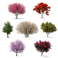 Flowering Bushes and Trees Collection 4