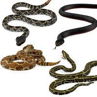Rigged Snakes Collection 2 for Cinema 4D